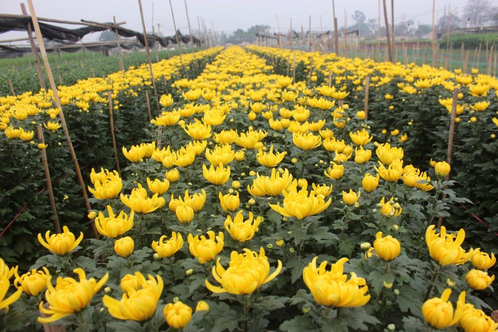 nguồn hoa từ nhà vườn